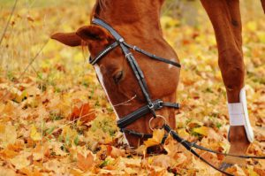 Exposing the Horse's Foot – HSK 5 Reading Practice