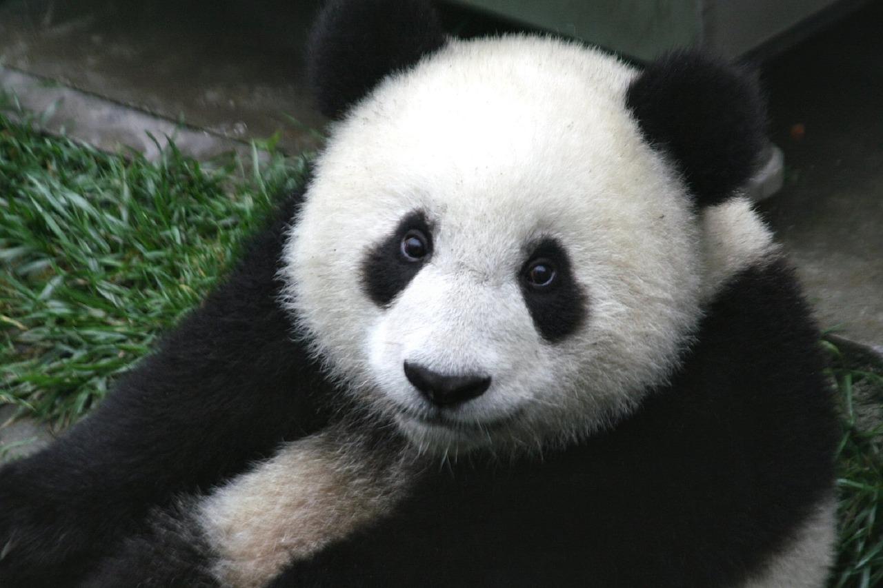 Panda Eyes – HSK 3 Reading Practice