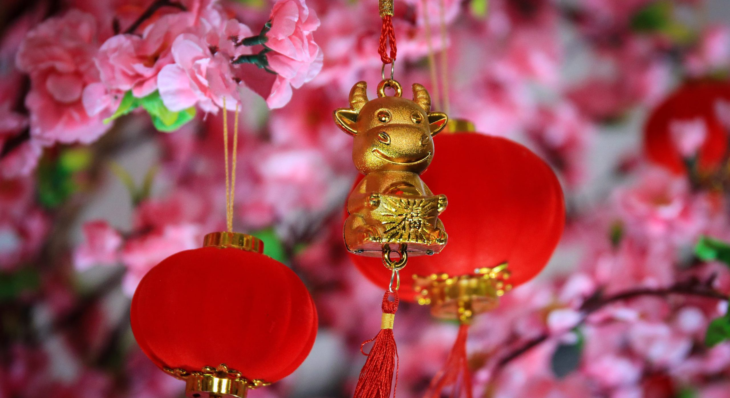 Top Reasons Why You Need to Start Celebrating Chinese New Year